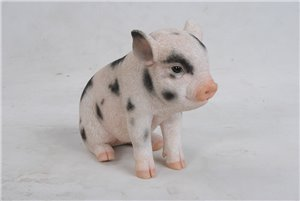 Sitting Baby Pig W and Black, 7 and 5 Inch x 3 and 5 Inch x 6 Inch